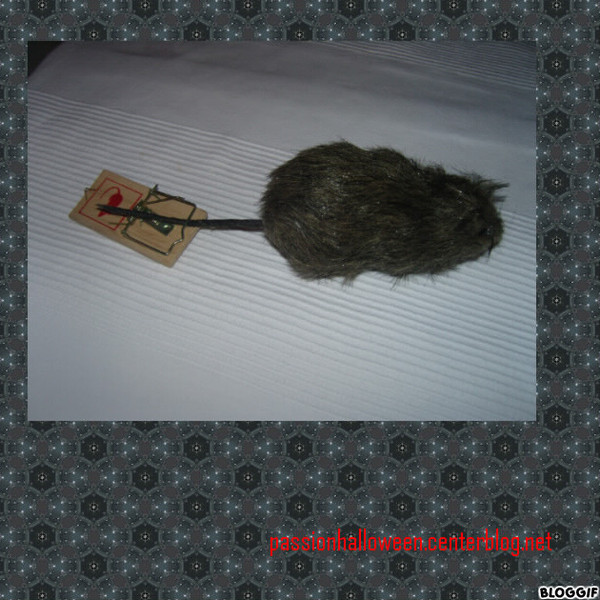 Rat et tapette - Tapette a rat ...